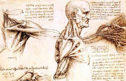 leonado anatomia