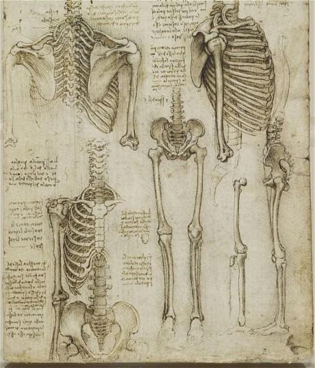 leonardo scheletro