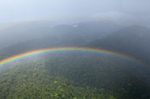 Coastal Rainforest in Cameroon