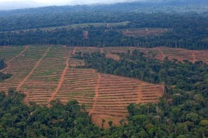 Oil Palm Nursery in Cameroon