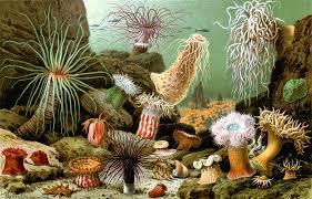 fiori di mare