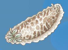 molluschi01.jpg