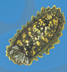 molluschi02.jpg