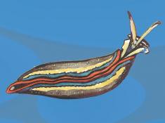 molluschi04.jpg