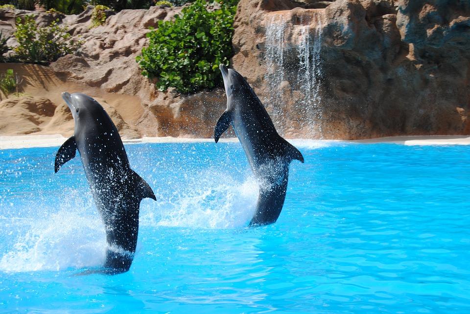 delfino3